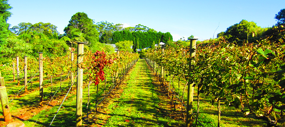 Tamborine Wine Tours In Limousine From Brisbane Or Gold Coast